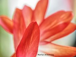 300-macro-red-cactus-05182019_015