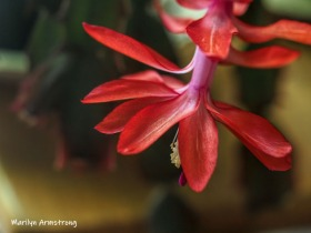300-macro-red-cactus-05182019_030