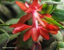 300-macro-red-cactus-05182019_034