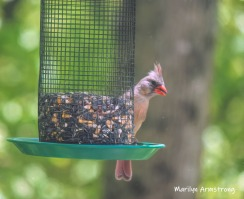 300-mrs-cardinal-late-may-05222019_038