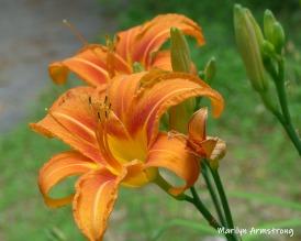 180-Daylilies-06292019_002