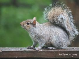 300-last-squirrels-06132019_202