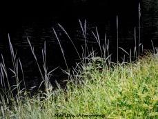 180-Reeds-River-MAR--06092019_069