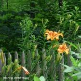 180-Square-Daylilies-06292019_006
