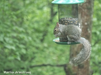 Squirrely!
