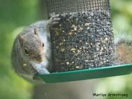 300-baby-squirrel-06012019_004