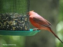 Cardinal (boy)
