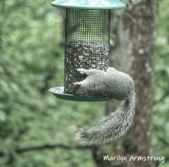 300-square-baby-squirrel-05302019_001