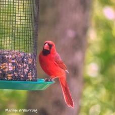 One Cardinal