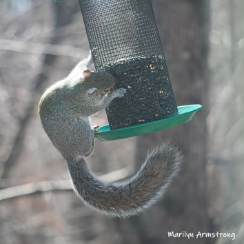 Squirrel just holding on to the feeder cage