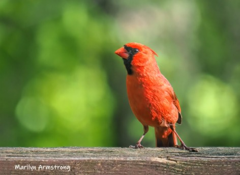 300-young-cardinal-05182019_103