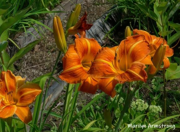 180-Flowers-Riverside-07302019_002