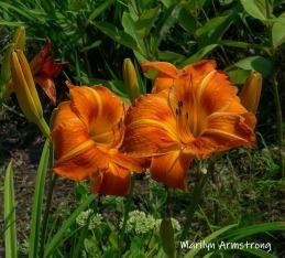 180-Flowers-Riverside-07302019_003