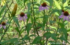 180-Flowers-Riverside-07302019_005