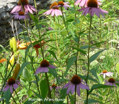 180-Flowers-Riverside-07302019_009