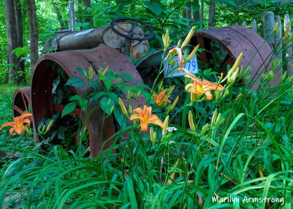 Old tractor with daylilies