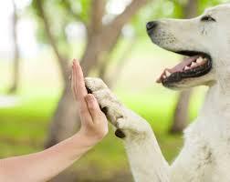 Dog BOnd- paw
