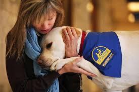 Dog BOnd- service2
