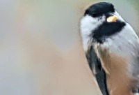 HEADER- Monday-Birds-20181126_301