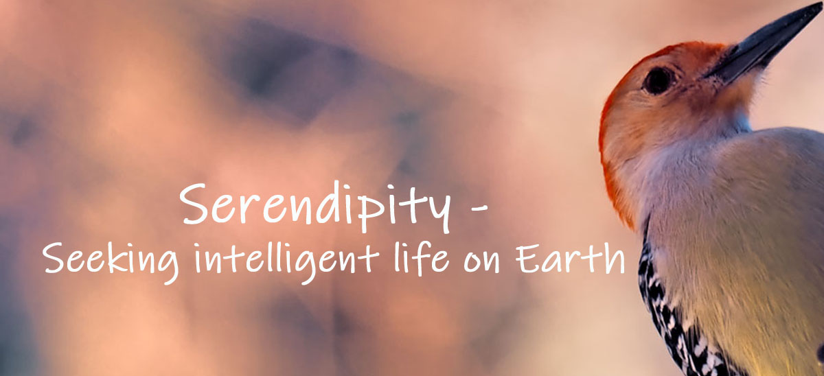 Serendipity Seeking Intelligent Life on Earth