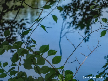 180-Branches-Gar-Canal-0802-08022019_124