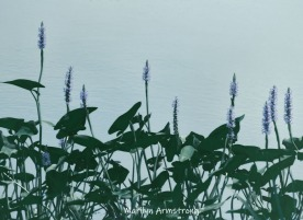 180-BW-Transparent-Water-Flowers-Mar-Flowers-at-Canal-0802-08022019_214