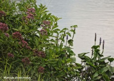 180-Flowers-Mar-RI-Blackstone-08252019_130