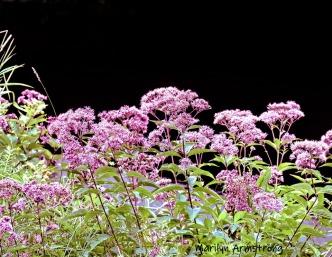 180-Flowers-Mar-RI-Blackstone-08252019_150