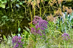 180-Flowers-Mar-RI-Blackstone-08252019_155