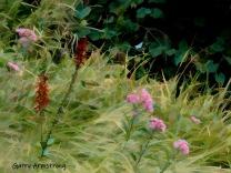 180-Impressionist-Flowers-Gar-RI-Blackstone-08252019_006
