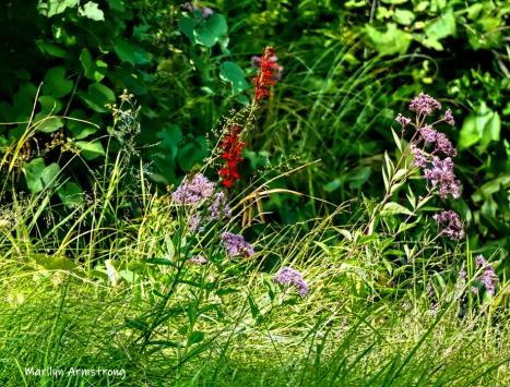 180-Red-Flower-Mar-RI-Blackstone-08252019_147