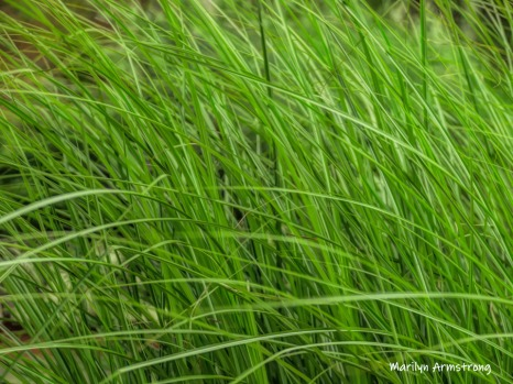 180-Reeds-Mar-RI-Blackstone-08252019_121