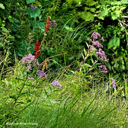 180-Square-Flowers-Mar-RI-Blackstone-08252019_148