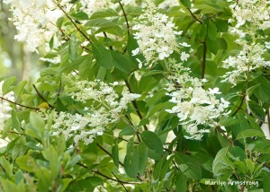180-White-Flowers-Mar-RI-Blackstone-08252019_109