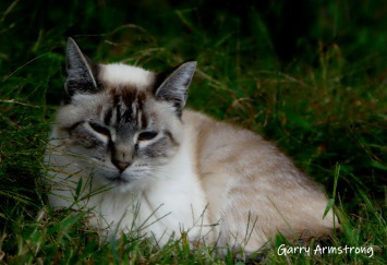 But this beauty sat nice and peacefully for me. A happy cat on a happy farm!