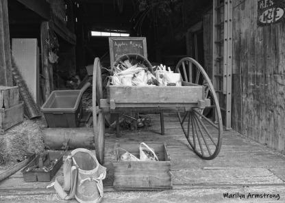 180-BW-Barn-MAR-Farm-Sept-09262019_074