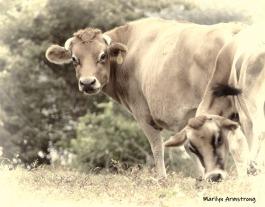 180-BW-Cows-MAR-Farm-Sept-09262019_005
