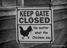 Ignore the chickens!