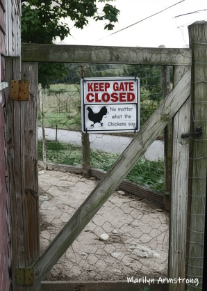 180-Chicken-Gate-MAR-Farm-Sept-09262019_037