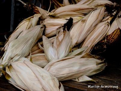 180-Corn-MAR-Farm-Sept-09262019_083