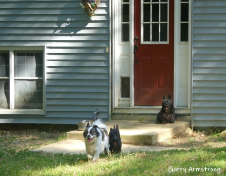 180-Dogs-Yard-Garry-Home- (32)