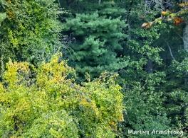 180-Foliage-MAR-Farm-Sept-09262019_049