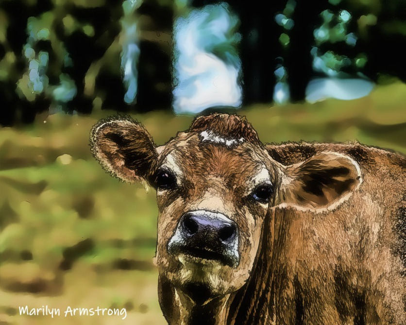 180-Hello-Cow-MAR-Farm-Sept-09262019_001