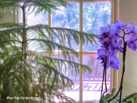 180-Orchids-Flowers-09112019_006