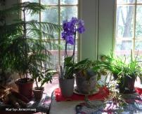 180-Orchids-Flowers-09112019_008