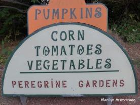 180-Pumpkins-09242019_017