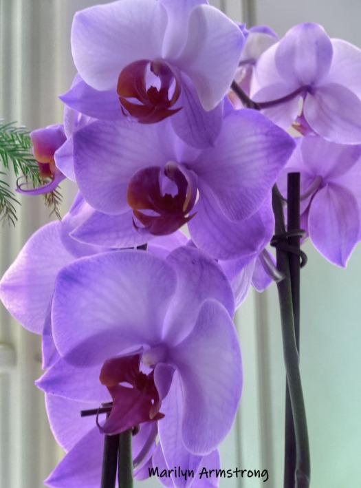 180-Purple-Orchids-09112019_002