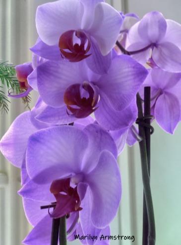 180-Purple-Orchids-09112019_002