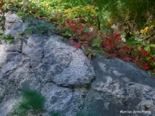 180-Virginia-Creeper-Early-Fall-09242019_008
