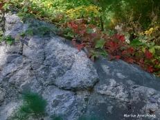 180-Virginia-Creeper-Early-Fall-09242019_008